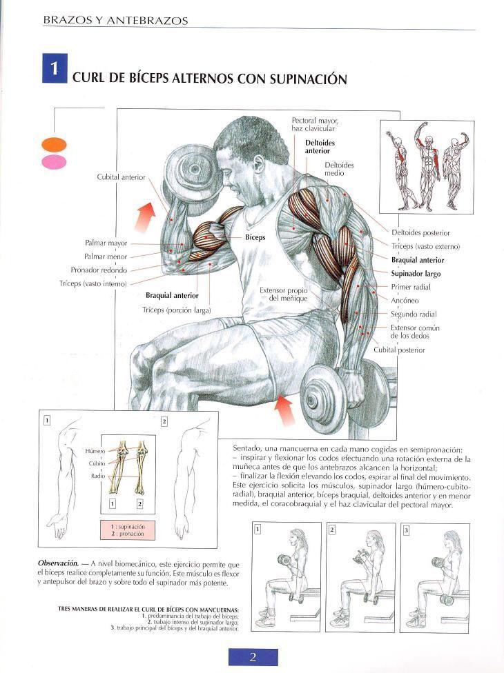 Curl de biceps alternos con supinación