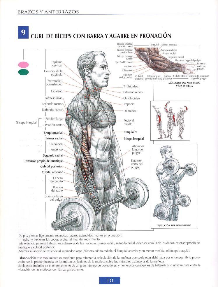 Curl de biceps con barra agarre en pronación