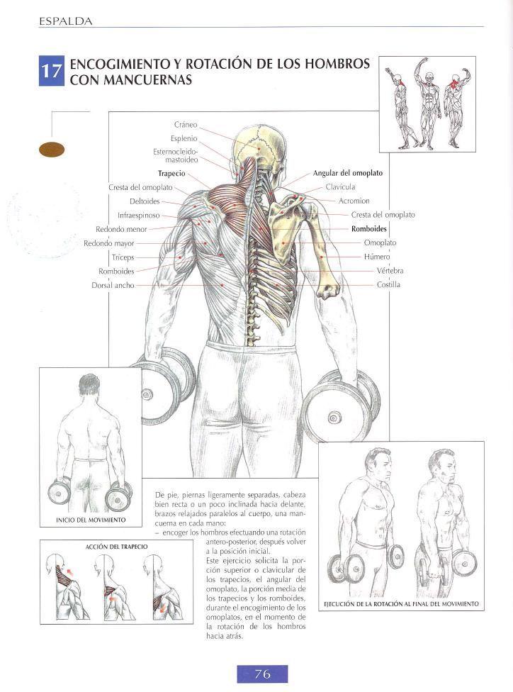 Encogimiento y rotación de los hombros con mancuernas