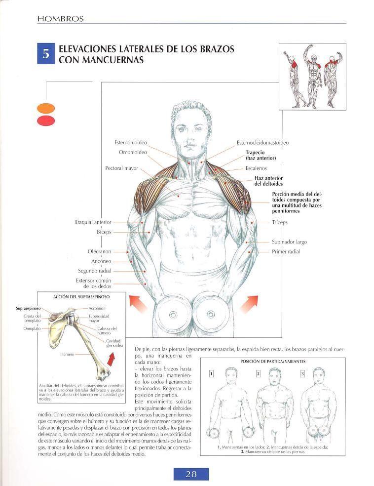 Elevaciones laterales de los brazos con mancuernas