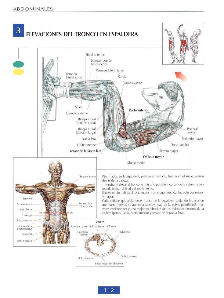 Elevaciones del tronco de espaldas