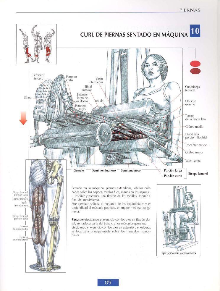 Curl de piernas sentado en máquina