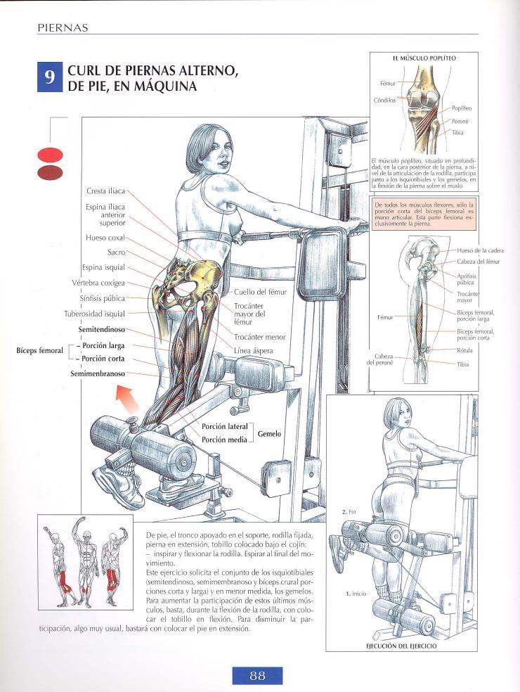 Curl de biceps femoral de pie