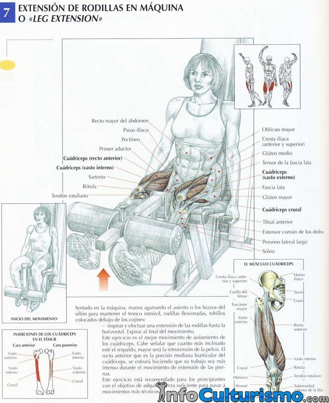 Extensiones de piernas en máquina