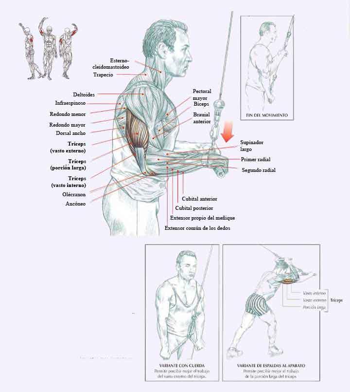 extensiones de triceps polea alta manos en pronacion