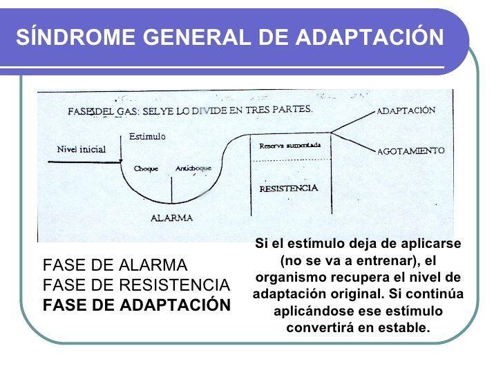 proceso-de-adaptación-deportiva