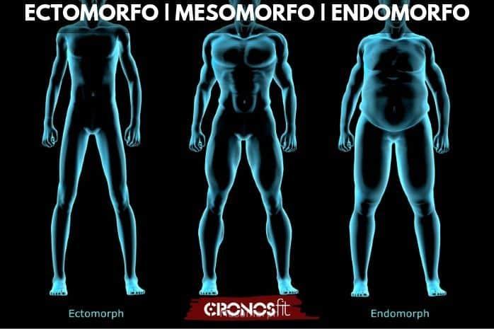 Tipos de somatotipos fitness