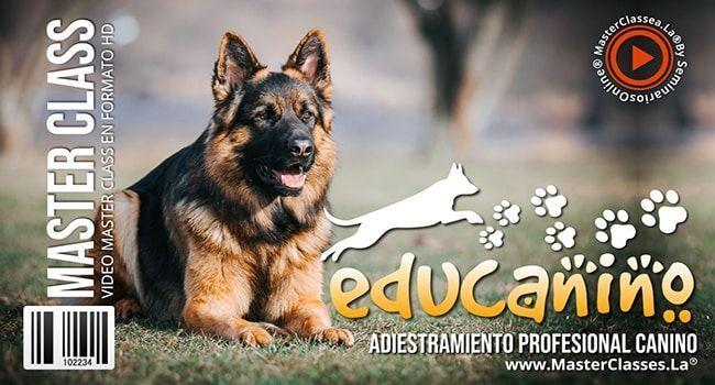 Educanino Adiestramiento Profesional