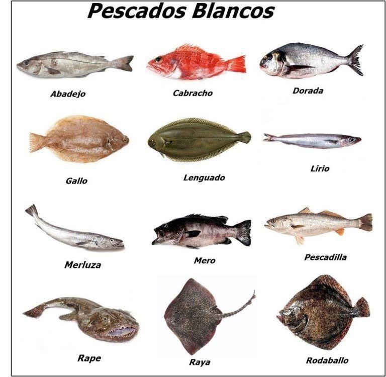 Listado de Pescado Blanco